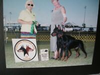 DOBERMAN PINSCHERS - Only 2 females - Taking Reservations Now