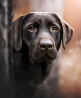 Wanted: LARGE DOG BREED PUPPY 4 TO 7 MONTHS OLD FOR EVER HOME