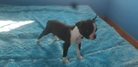 Puppies for rehomeing