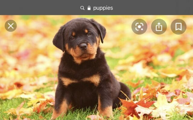 Wanted:                             Looking for mixed breed PUPPY