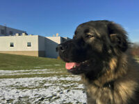 Live Stock and Protection Dog In Need of Right Home
