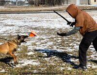 Working Line German Shepherd / Belgian Malinois Puppies