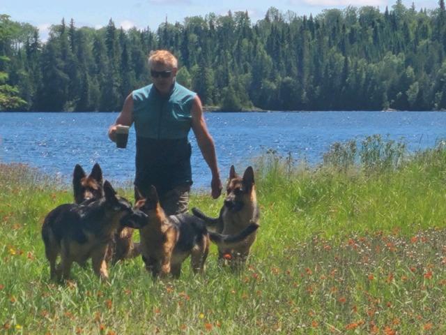 World class German Shepherd pups