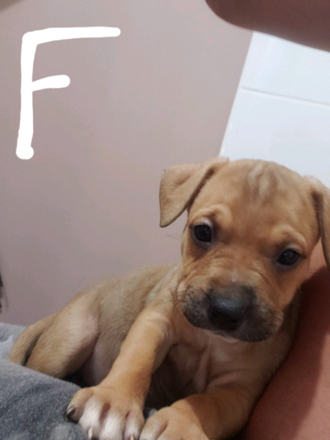 Puppies For A Good Home