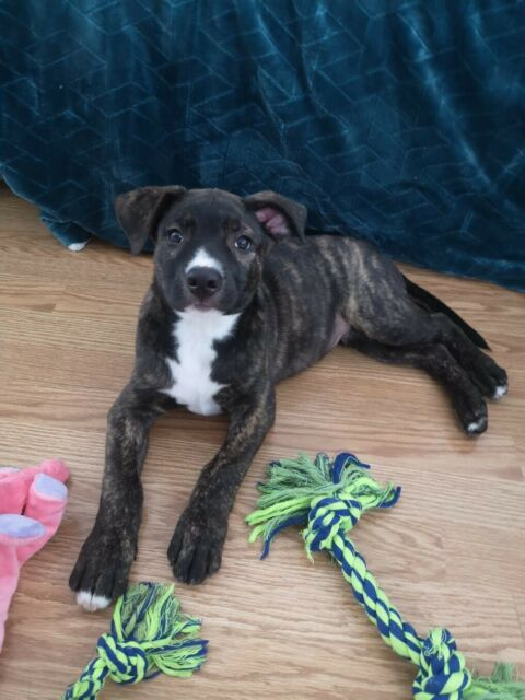 3 month old puppy looking for a home