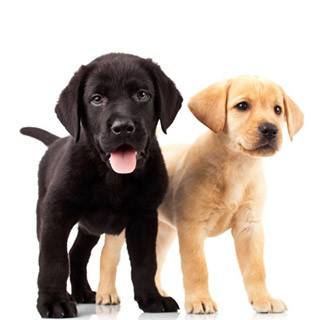 40 tips for new puppy