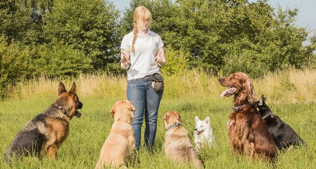 Teach your dog with 5 essential commands